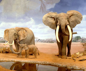 Image borrowed from www.nhm.org